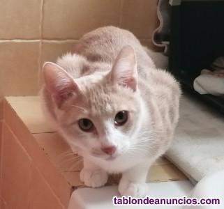 Gatito de 5 meses y medio en adopción