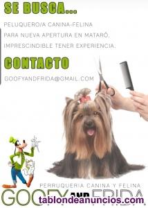 Se busca peluquer@ para peluqueria canina