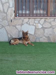 Cuidador guardería de perros.