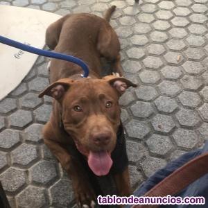 Precisoso perro busca familia de adopción