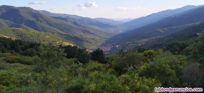 Fincas de cerezos y casa para reformar en el valle del jerte:
