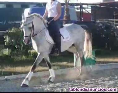 Pony doma clasica