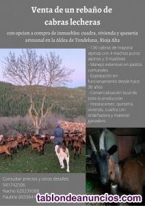 Venta de cabras lecheras alpinas con opción compra Quesería artesanal
