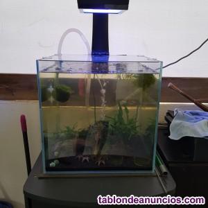 Gambario-acuario, ecotech radion xr15 fw