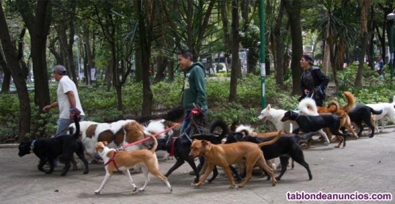 Paseos y cuidados de mascotas.