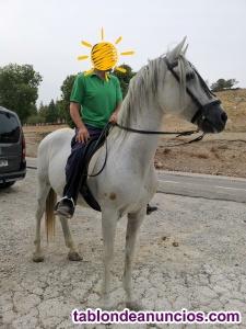 Vendo caballo enganchado y montado