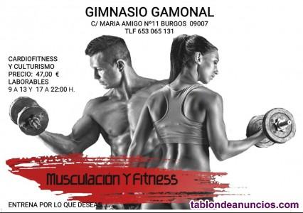 Musculación Fitness