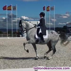 Clases de equitación con caballo nivel Gran Premio