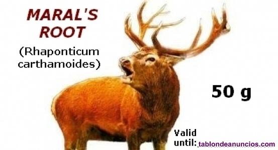 La raíz de maral puede ayudar a promover los procesos de construcción muscular!
