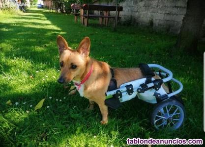 Silla de ruedas para perro o gato