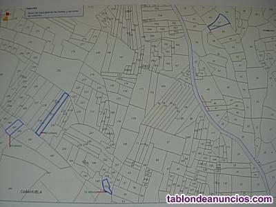 4 Olivares