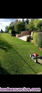 Mantenimiento de jardines y poda de palmeras
