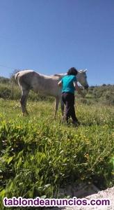 Comparto terreno para otro caballo, en pupilaje, 5000 mt2. Vigilancia las 24 h