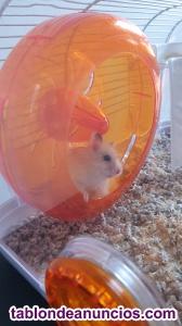 Regalo hamster bebe