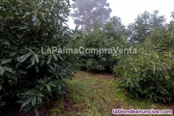 Terreno en producción de aguacates con alrededor de 100 matas plantadas  ID-444