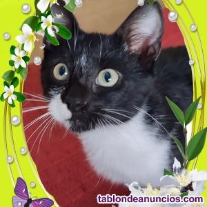 Zarpitas gatito en adopción RESPONSABLE