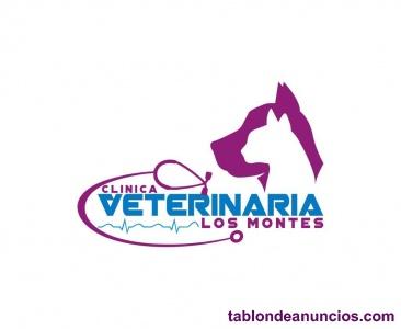 Se busca Veterinario/a