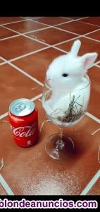 Vendo conejo toys!