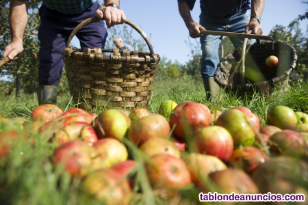 Cuadrilla recolección fruta campaña 2021