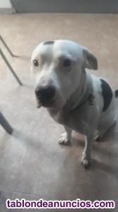 Tyson 1 año y medio