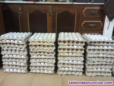 Lote de más de 1.200 pelotas de golf recuperadas.
