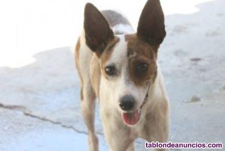 Ohanna, perra pequeña en adopcion