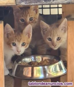 ¡estas preciosidades buscan un hogar!