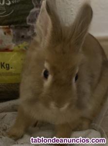 Regalo Conejo Toy