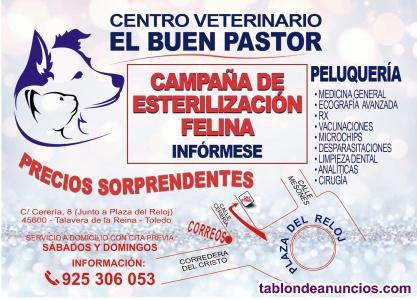 Campaña de castración de gatos en Talavera de la Reina