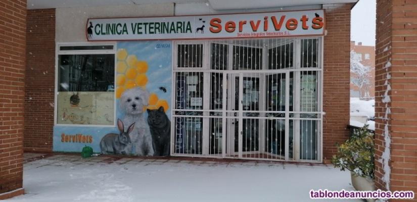 Se precisa Veterinario- Cirugía Guadalajara