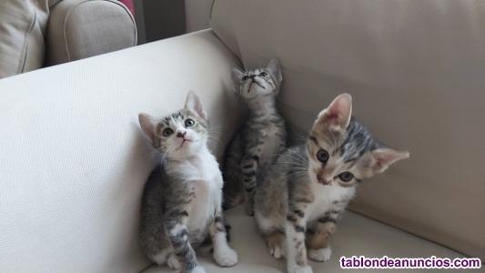 Gatitos necesitan un hogar