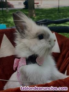 Regalo conejo angora toy de 8 meses