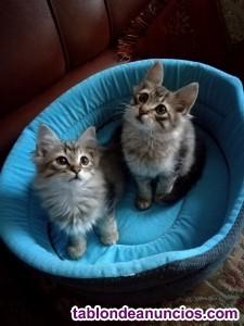 Gatitos muy peluditos