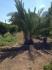 Fotos del anuncio: Venta de chalet en construccion con terreno. Tranquilo y soleado