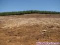 Vallados y limpieza de campos en valencia 654164982