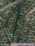 Fotos del anuncio: Fincas de olivar y huerto