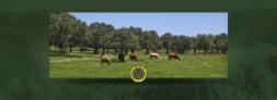 Fotos del anuncio: Córdoba compra-venta de fincas rusticas valle de los pedroches andalucia