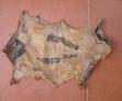 Fotos del anuncio: Papiros naturales de piel de conejo