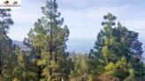 Fotos del anuncio: 49 Vende terreno rústico en Tijarafe la Palma islas Canarias España