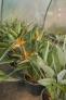 Fotos del anuncio: Vivero de palmeras en liquidación