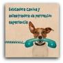 Fotos del anuncio: Se ofrece educadora canina y adiestradora