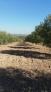 Fotos del anuncio: Fincas de olivos y de calmas de regadio