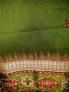 Fotos del anuncio: Precioso vestido veraniego
