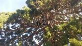Fotos del anuncio: Poda y tala en altura de árboles