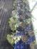 Fotos del anuncio: Ginkgo biloba en doña blanca y jerez