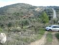 Fotos del anuncio: OLIVAR en VIA PECUARIA DE LOS ALCACHOFARES