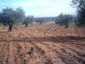 Vendo olivar de 88000 metros  cuadrados, al suroeste de madrid (villa del prado)