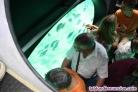 Fotos del anuncio: Embarcación comercial semi submarina para 10 pasajeros