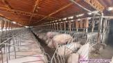Fotos del anuncio: Peón de granja porcina