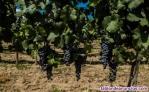 Finnca de viñedos olivares y algorrobos